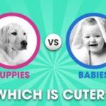 Puppies vs. Babies!